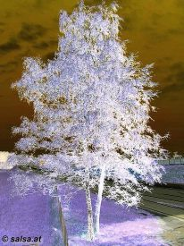tree: negative image